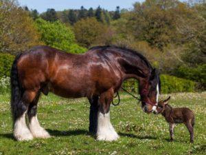 3-horse-donkey-1024x768