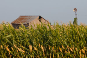 Old-Barn-Corn-Crop-and-Windmill