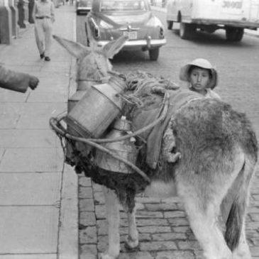 The Responsible Donkey