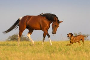 dog-and-horse-acupuncture