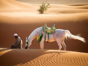 emirates-arabian-mare_93377_990x742
