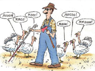 Thanksgiving Day Humor